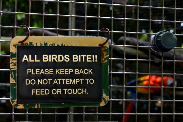 birdbites_Fotor